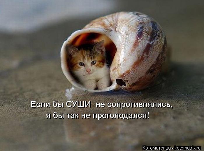 Котоматрица: Если бы СУШИ  не сопротивлялись, я бы так не проголодался!