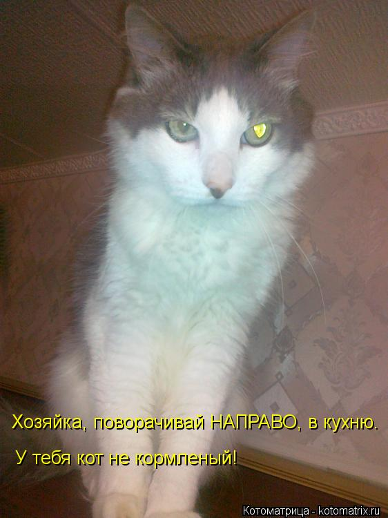 Котоматрица: Хозяйка, поворачивай НАПРАВО, в кухню. У тебя кот не кормленый!