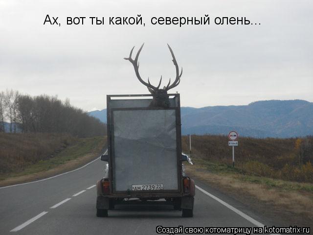 Котоматрица: Ах, вот ты какой, северный олень...