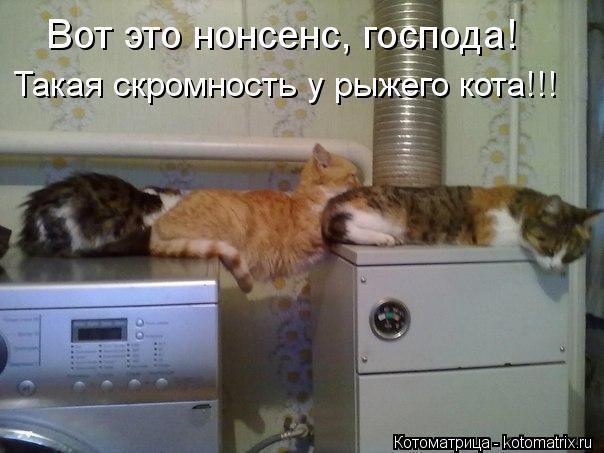 Котоматрица: Вот это нонсенс, господа! Такая скромность у рыжего кота!!!
