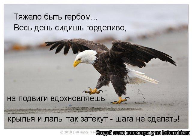 Котоматрица: Тяжело быть гербом... Весь день сидишь горделиво, на подвиги вдохновляешь, крылья и лапы так затекут - шага не сделать!