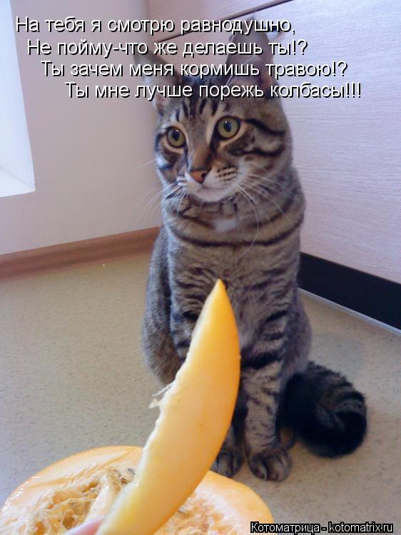Котоматрица: На тебя я смотрю равнодушно, Не пойму-что же делаешь ты!? Ты зачем меня кормишь травою!? Ты мне лучше порежь колбасы!!!