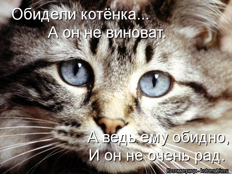 Котоматрица: Обидели котёнка... А он не виноват. А ведь ему обидно, И он не очень рад.