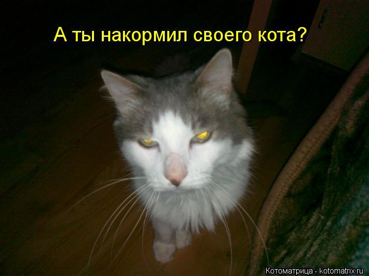 Котоматрица: А ты накормил своего кота?