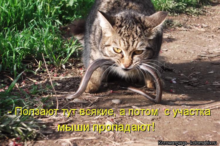 http://kotomatrix.ru/images/lolz/2012/04/26/1172823.jpg