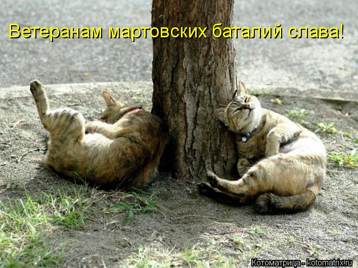 Котоматрица: Ветеранам мартовских баталий слава!