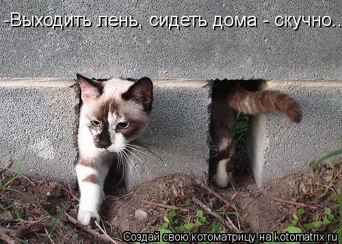Котоматрица: -Выходить лень, сидеть дома - скучно...