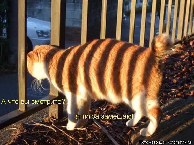 Котоматрица: А что вы смотрите? я тигра замещаю!