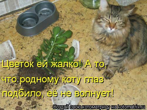 Котоматрица: Цветок ей жалко! А то, что родному коту глаз подбило, её не волнует!