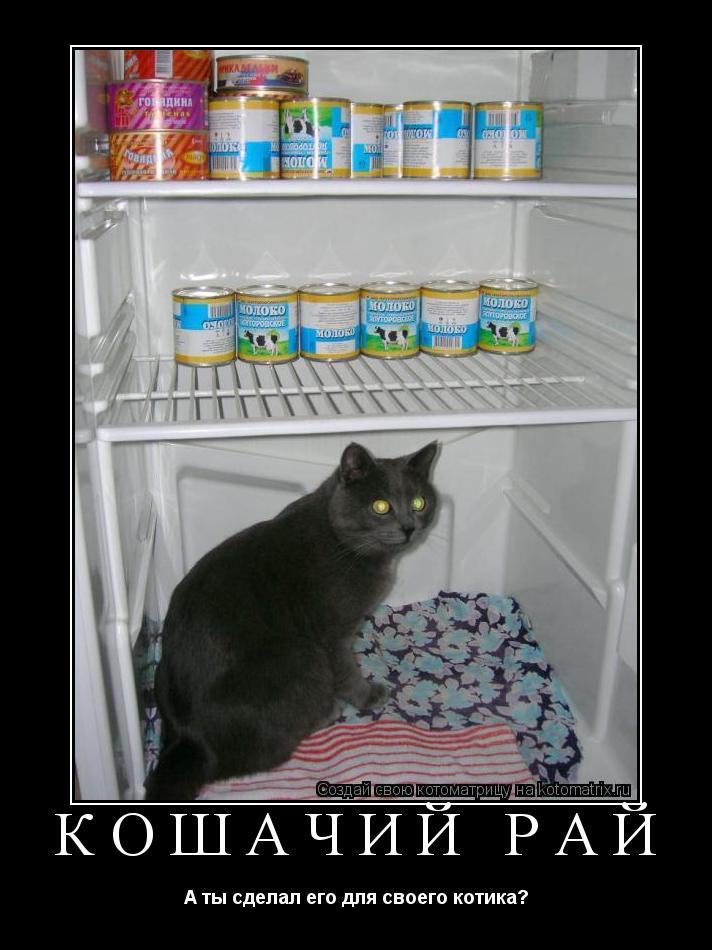 Котоматрица: КОШАЧИЙ РАЙ А ты сделал его для своего котика?
