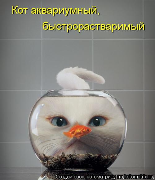 Котоматрица: Кот аквариумный,  быстрорастваримый