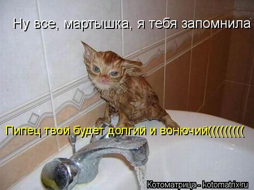Котоматрица: Ну все, мартышка, я тебя запомнила Пипец твой будет долгий и вонючий(((((((((