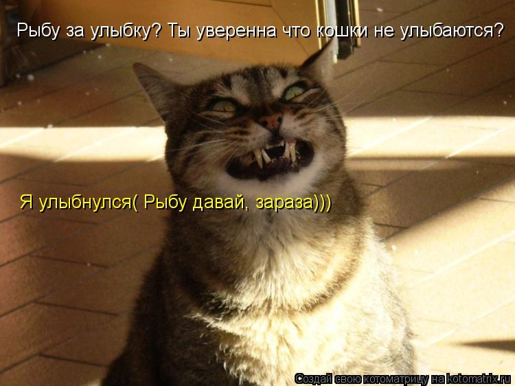 Котоматрица: Рыбу за улыбку? Ты уверенна что кошки не улыбаются? Я улыбнулся( Рыбу давай, зараза)))