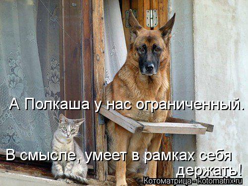 Котоматрица: А Полкаша у нас ограниченный. В смысле, умеет в рамках себя держать!