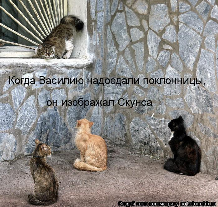 Котоматрица: Когда Василию надоедали поклонницы, он изображал Скунса