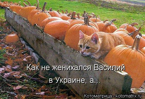 Котоматрица: Как не женихался Василий  в Украине, а...