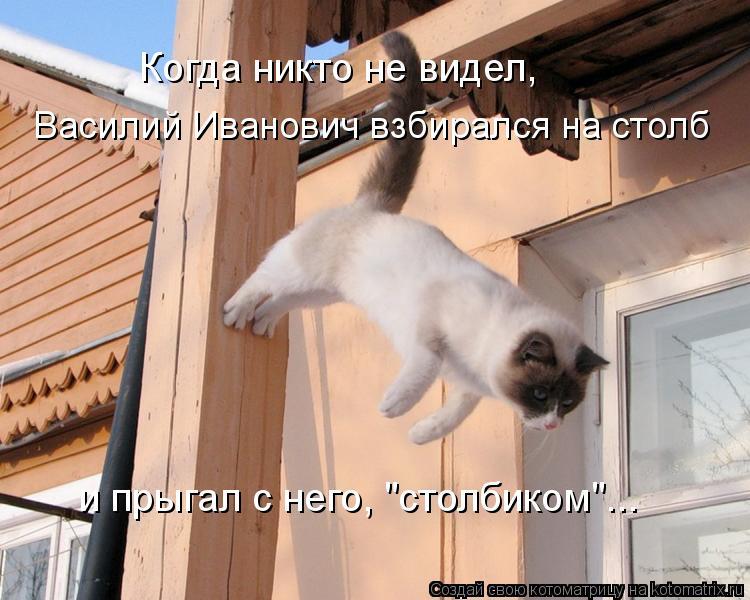 """Котоматрица: Когда никто не видел, Василий Иванович взбирался на столб и прыгал с него, """"столбиком""""..."""