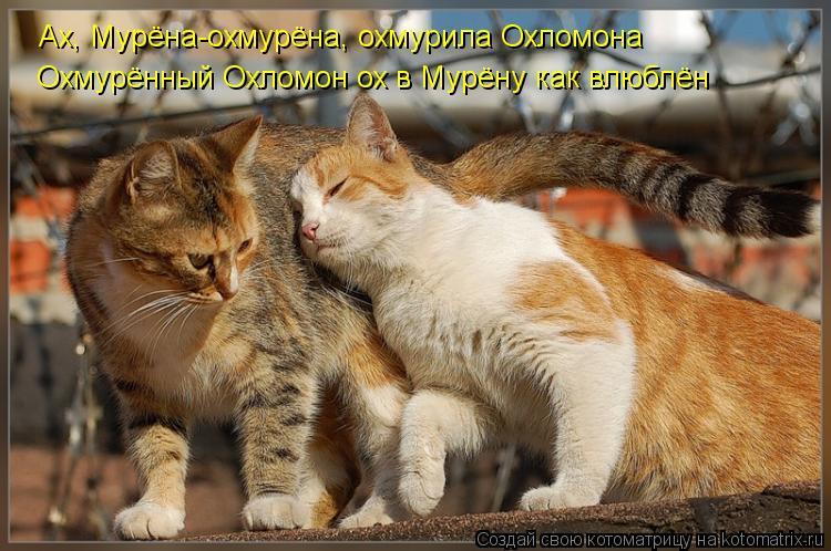Котоматрица: Ах, Мурёна-охмурёна, охмурила Охломона Охмурённый Охломон ох в Мурёну как влюблён