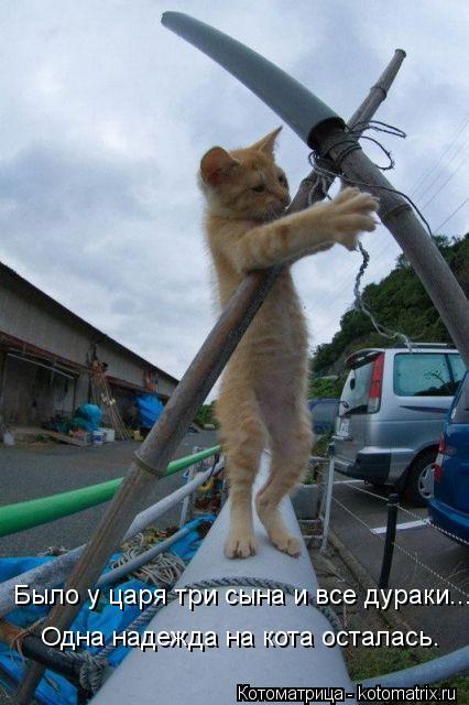 Котоматрица: Было у царя три сына и все дураки... Одна надежда на кота осталась.