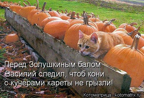 Котоматрица: Перед Золушкиным балом Василий следил, чтоб кони  с кучерами кареты не грызли!
