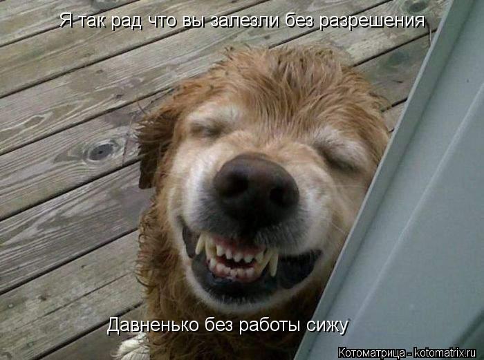 Котоматрица: Я так рад что вы залезли без разрешения Давненько без работы сижу