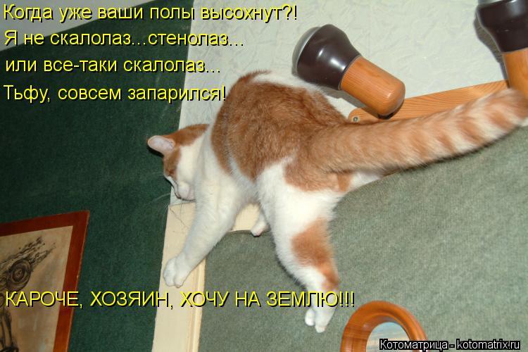 Котоматрица: Когда уже ваши полы высохнут?! Я не скалолаз...стенолаз... или все-таки скалолаз... Тьфу, совсем запарился! КАРОЧЕ, ХОЗЯИН, ХОЧУ НА ЗЕМЛЮ!!!