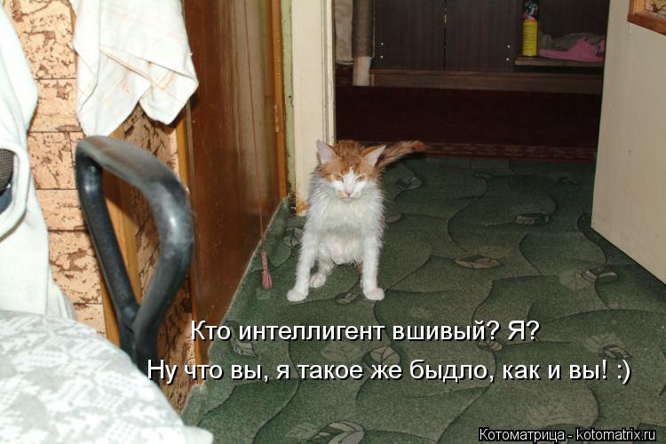 Котоматрица: Ну что вы, я такое же быдло, как и вы! :)  Кто интеллигент вшивый? Я?