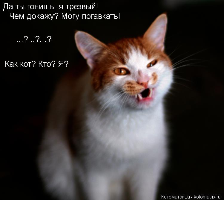 Котоматрица: Да ты гонишь, я трезвый! Чем докажу? Могу погавкать!  Как кот? Кто? Я?  ...?...?...?