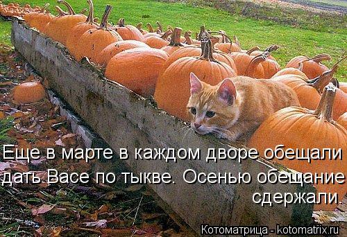 Котоматрица: Еще в марте в каждом дворе обещали дать Васе по тыкве. Осенью обещание сдержали.