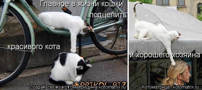 Котоматрица: Главное в жизни кошки красивого кота и хорошего хозяина подцепить