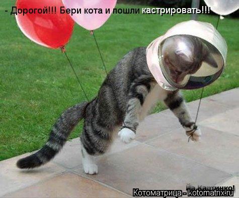 Котоматрица: - Дорогой!!! Бери кота и пошли кастрировать!!!