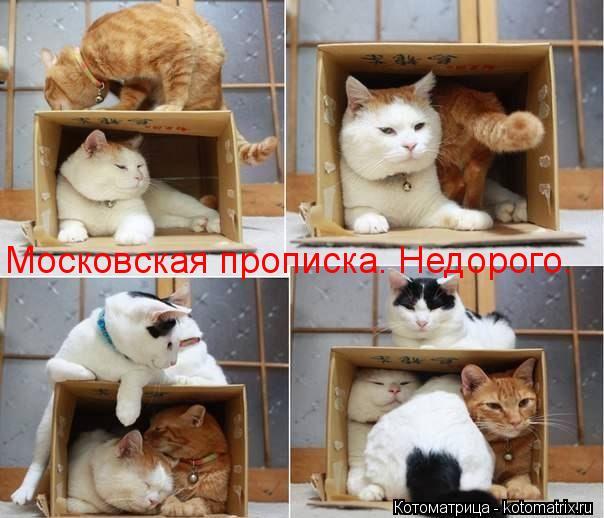 Котоматрица: Московская прописка. Недорого.
