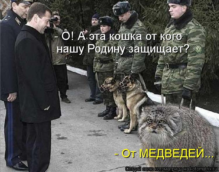 Котоматрица: - О! А эта кошка от кого  нашу Родину защищает? - От МЕДВЕДЕЙ...