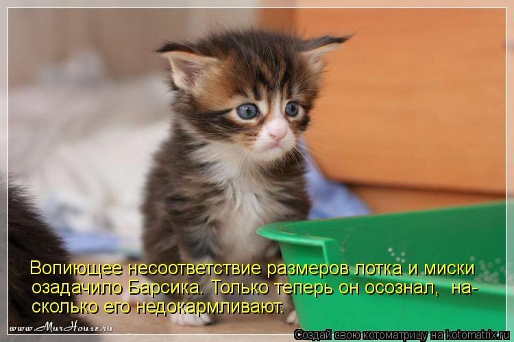 Котоматрица - Послушна и добра душа моя -  Тем злее и вредней второе Я!