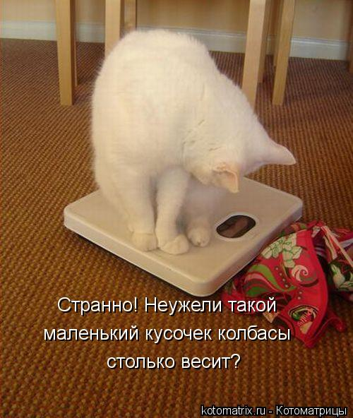 Котоматрица: Странно! Неужели такой маленький кусочек колбасы столько весит?