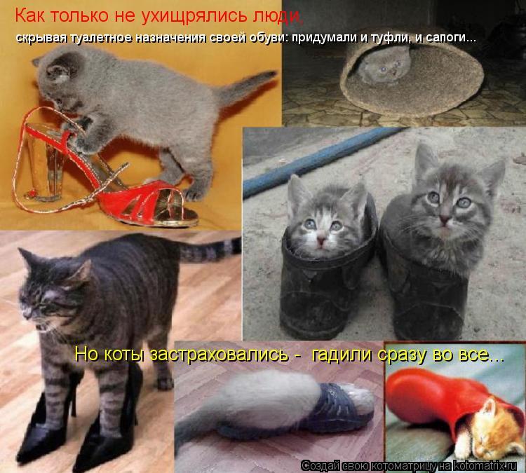Котоматрица: Как только не ухищрялись люди, скрывая туалетное назначения своей обуви: придумали и туфли, и сапоги... Но коты застраховались -  гадили сраз