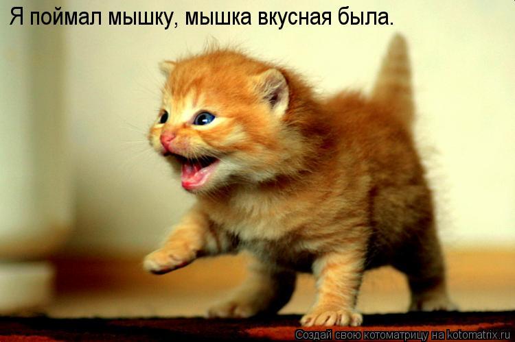 Котоматрица: Я поймал мышку, мышка вкусная была.