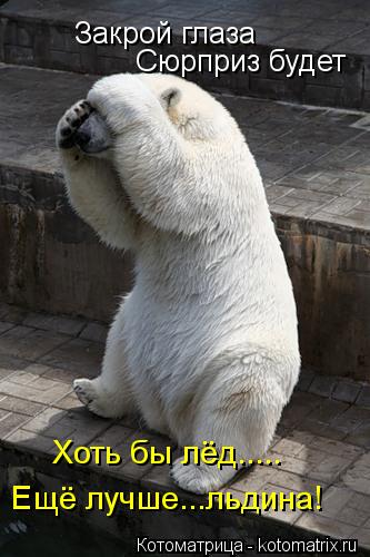 Котоматрица: Закрой глаза Сюрприз будет Хоть бы лёд..... Ещё лучше...льдина!