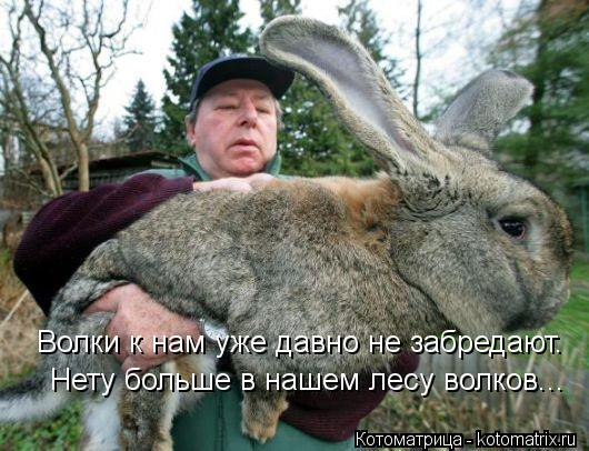 Котоматрица: Волки к нам уже давно не забредают. Нету больше в нашем лесу волков...