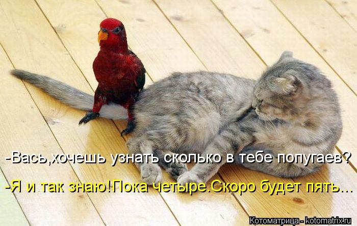 Котоматрица: -Вась,хочешь узнать сколько в тебе попугаев? -Я и так знаю!Пока четыре.Скоро будет пять...