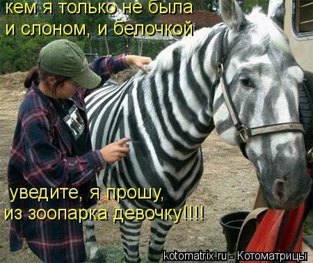 Котоматрица: кем я только не была и слоном, и белочкой уведите, я прошу, кем я только не была из зоопарка девочку!!!!