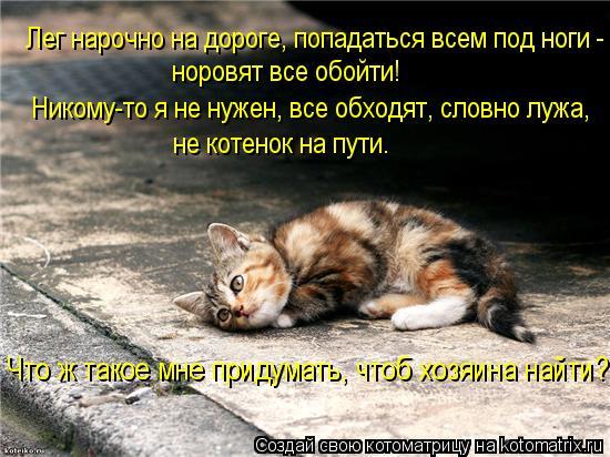 Котоматрица: Лег нарочно на дороге, попадаться всем под ноги - норовят все обойти! Никому-то я не нужен, все обходят, словно лужа, не котенок на пути. Что ж