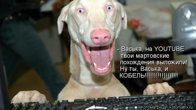 Котоматрица: - Васька, на YOUTUBE   твои мартовские похождения выложили! Ну ты, Васька, и  КОБЕЛЬ!!!!!!!!!!!!!!!!