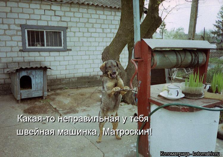 Котоматрица: Какая-то неправильная у тебя швейная машинка, Матроскин!