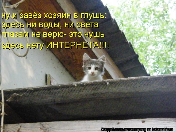 Котоматрица: ну и завёз хозяин в глушь: здесь ни воды, ни света глазам не верю- это чушь здесь нету ИНТЕРНЕТА!!!!