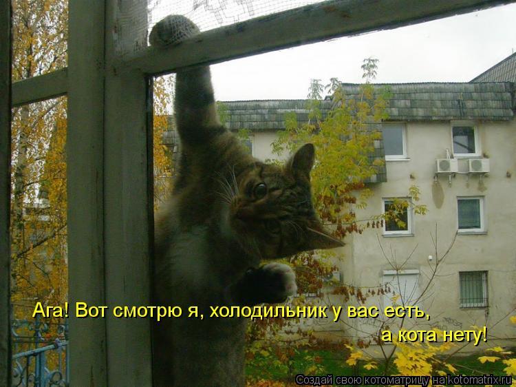 Котоматрица: Ага! Вот смотрю я, холодильник у вас есть, а кота нету!