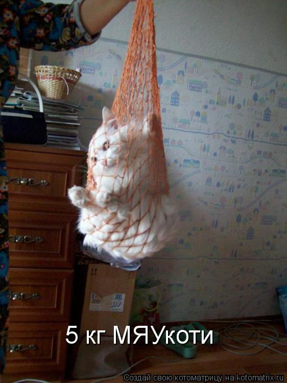 Котоматрица: 5 кг МЯУкоти