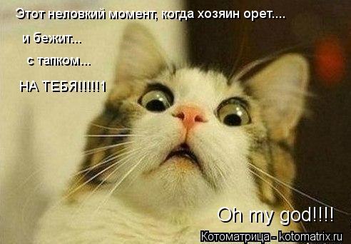 Котоматрица: Этот неловкий момент, когда хозяин орет.... и бежит... с тапком... НА ТЕБЯ!!!!!1 Oh my god!!!!