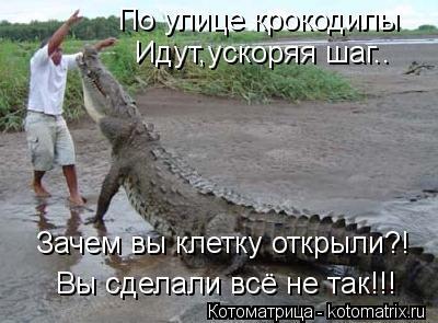 Котоматрица: По улице крокодилы Идут,ускоряя шаг..  Зачем вы клетку открыли?!  Вы сделали всё не так!!!