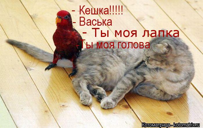 Котоматрица: Кешка!!!!! - - Васька - Ты моя лапка -Ты моя голова
